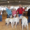 Thumbnail image for Oregon State Fair St. Croix Open Sheep Show Results