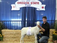 Registered St Croix Ewe Lambs